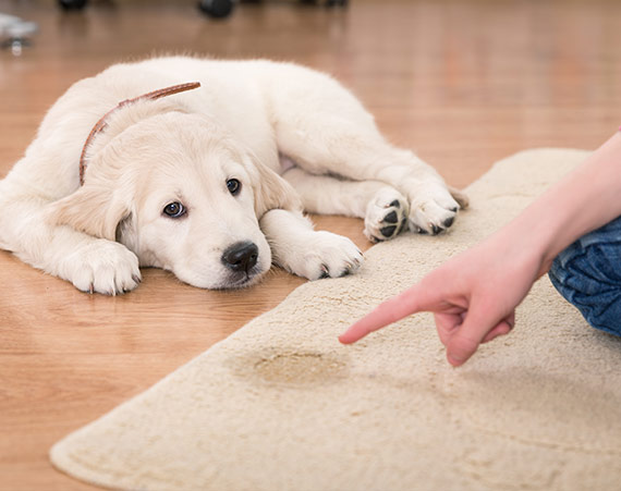 pet stain cleaning